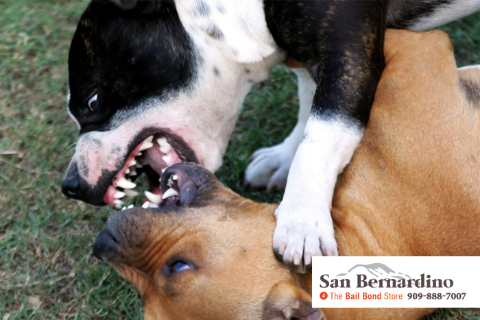 consequences for dog fighting
