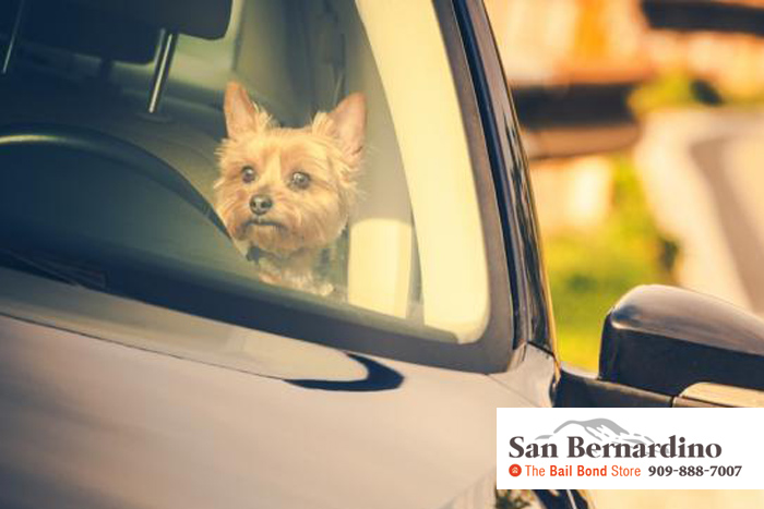 can you leave a dog in cold car san bernardino bail bonds
