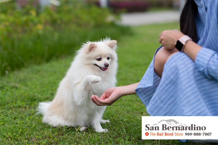 california laws for pet owners